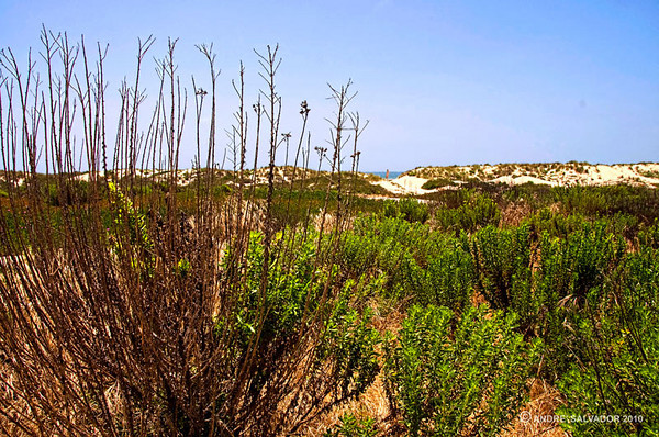 CALIFORNIA - OXNARD BEACH PARK, CITY OF OXNARD