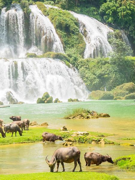 Vietnam Ban Gioc Falls_P1120736.jpg