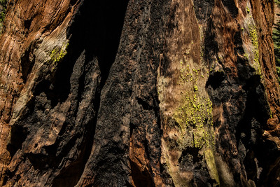 Barkscape: General Grant Tree, Grants Grove | Kings Canyon National Park