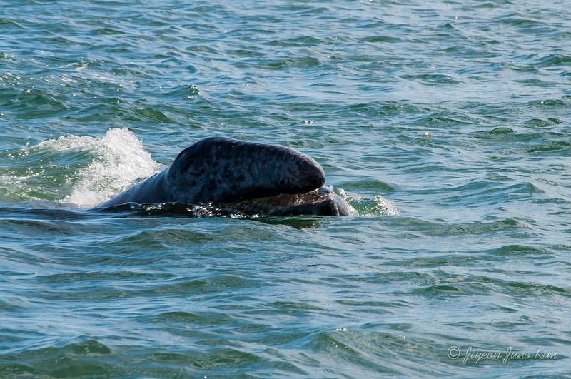 Mexico-Loreto-Whale-1762.jpg
