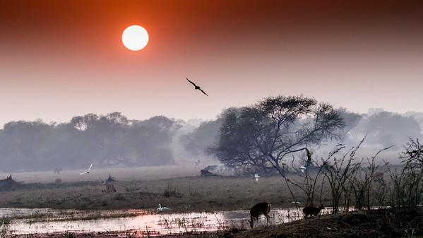 India- Bharatpur Keoladeo Ghana National Park / Chambal River