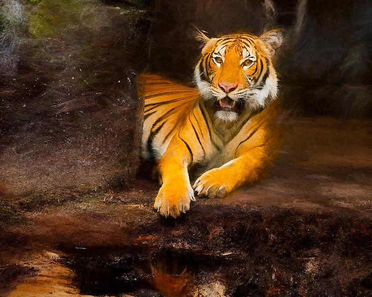 Tiger_DSC7619-copy1-copy.jpg