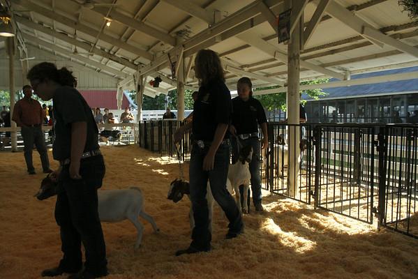 Sheep, Lamb and Goat Show
