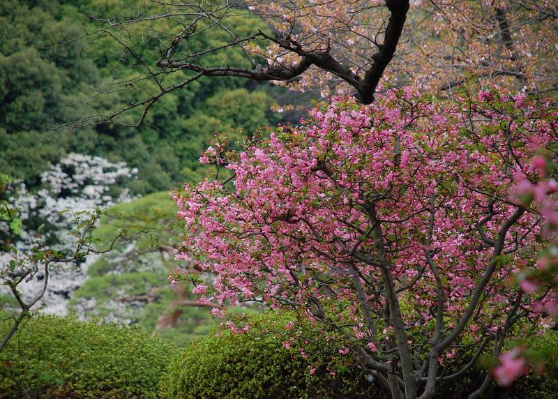 28-Japan07_1432.JPG