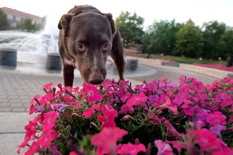 rufusflowers.jpg