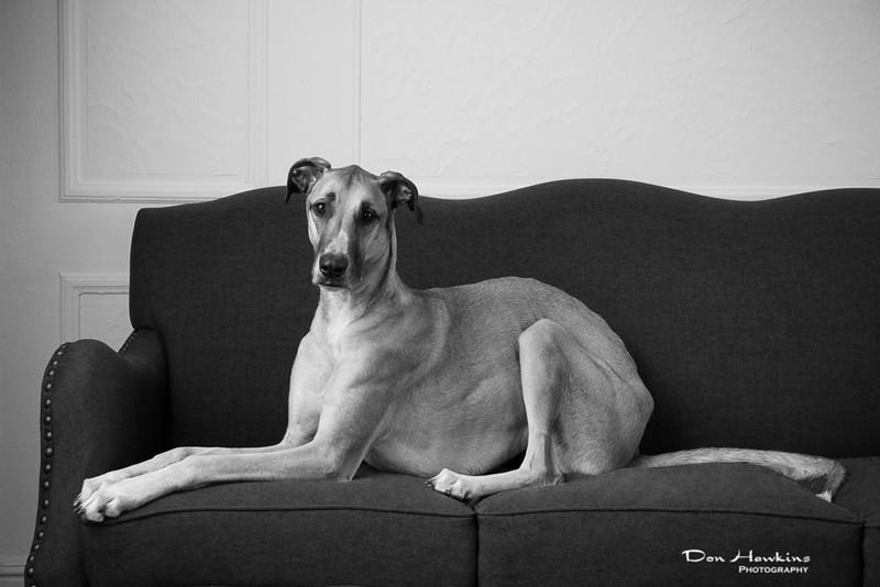 emily-mason-pets-2014-0329-Edit.jpg