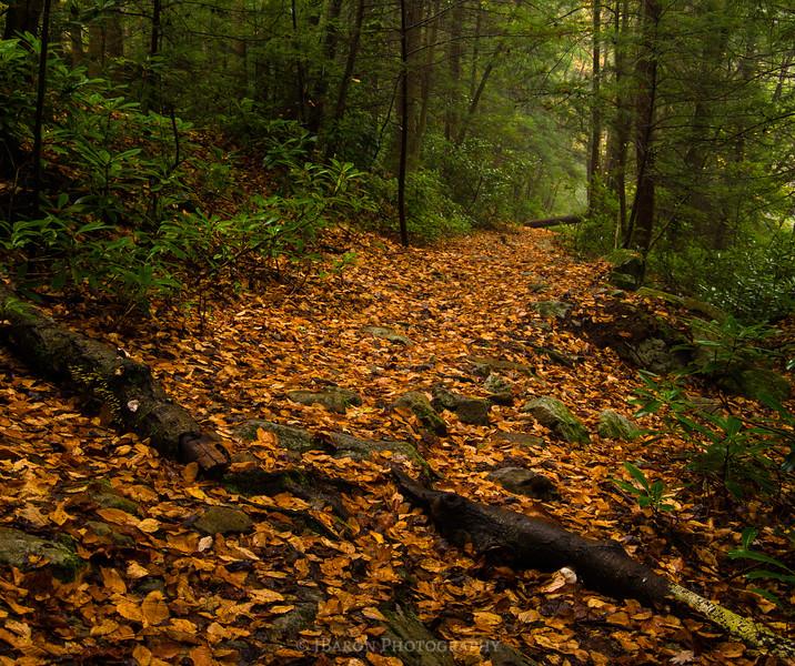 Follow the Orange Leaf Trail