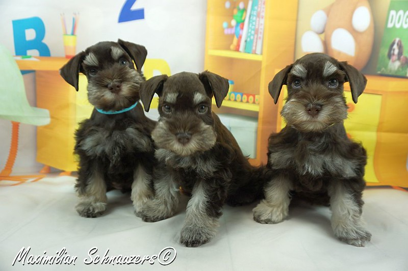 Amy Pups 002.jpg