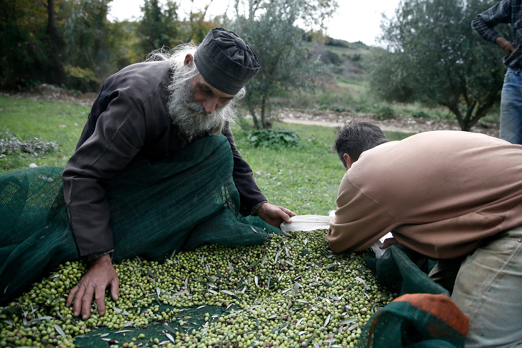. Greek Orthodox Priest Dimitris Vlasopoulos collects olives from a canvas tarp in Kalo Pedi village, about 335 kilometers (210 miles) west of Athens, Greece on Friday, Nov. 29, 2013. Widespread ownership of olive groves among Greeks has helped maintain supplies to households as they struggle through a sixth year of recession. (AP Photo/Petros Giannakouris)