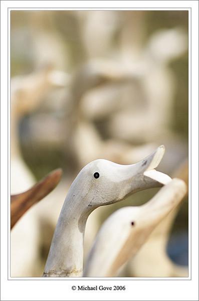 Field of ducks (65444490).jpg