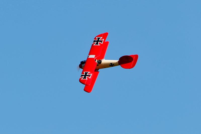PZ_Albatros_19.jpg