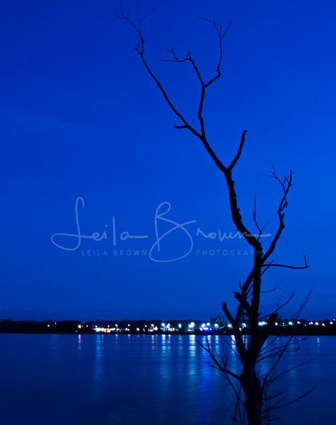 island lake blue tree.jpg