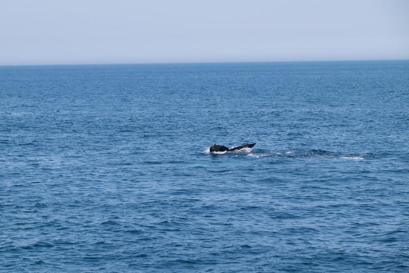 humpbacks-6293.jpg