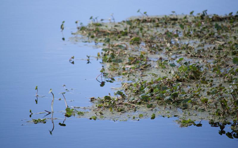 canal plants.jpg