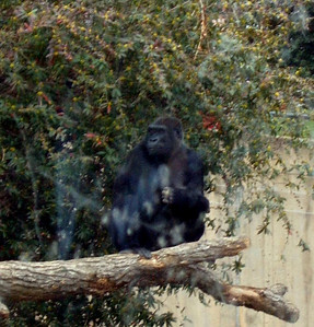 National Zoo 2005