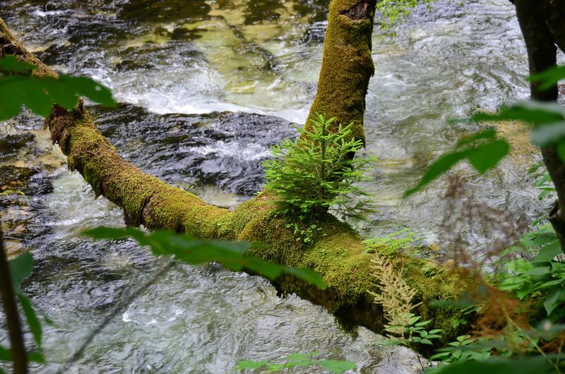 Vintgar Gorge. Bled
