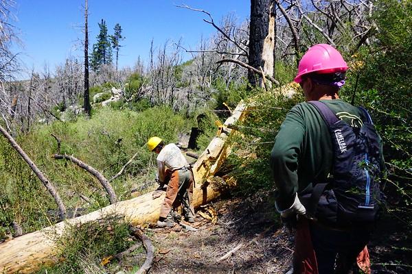 2017-04-30 - Chainsaw Trailwork, Vetter Mountain Trail