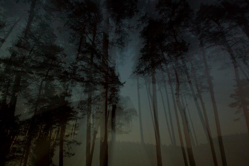 Noc w lasach.jpg