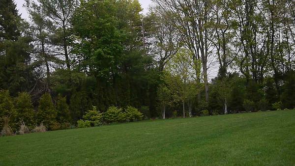 Trees 5.06.12