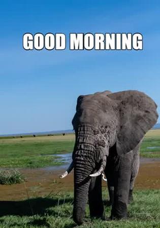 Good morning.mp4