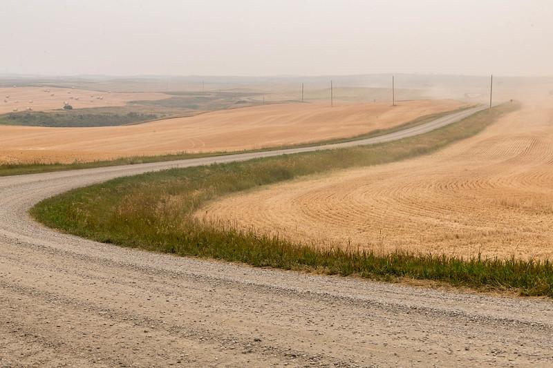 barley 49.jpg
