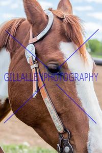 CSHA 150517 Portrait