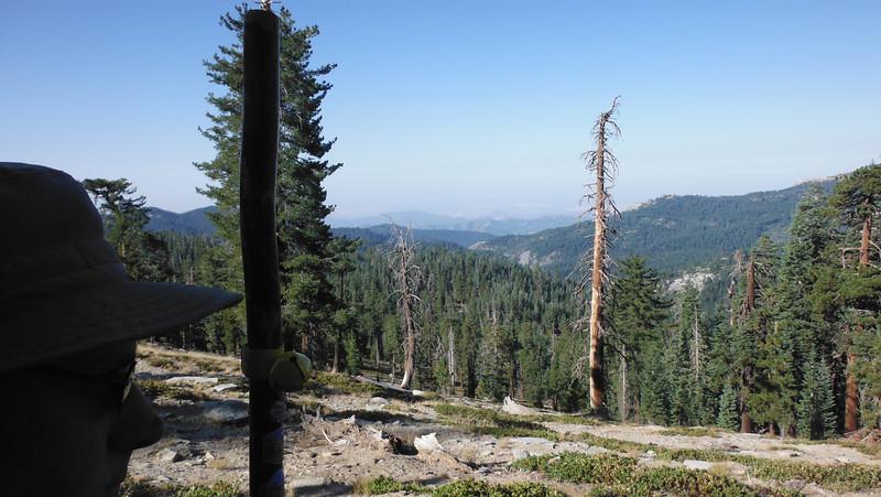 sequoia 070.JPG