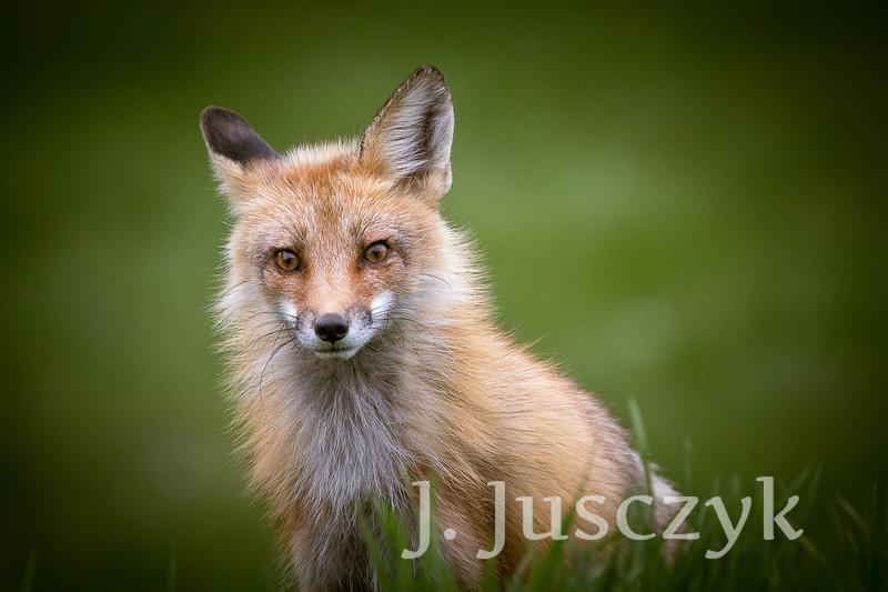 Jusczyk2021-6225.jpg