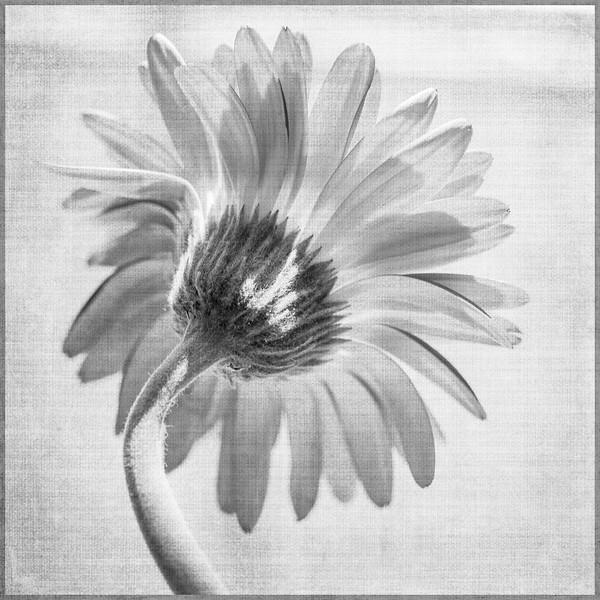dead-flowers-6285-Edit.jpg