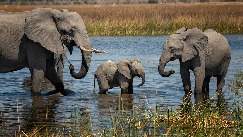 2014-08Aug-Okavango Masters-71-Edit.jpg