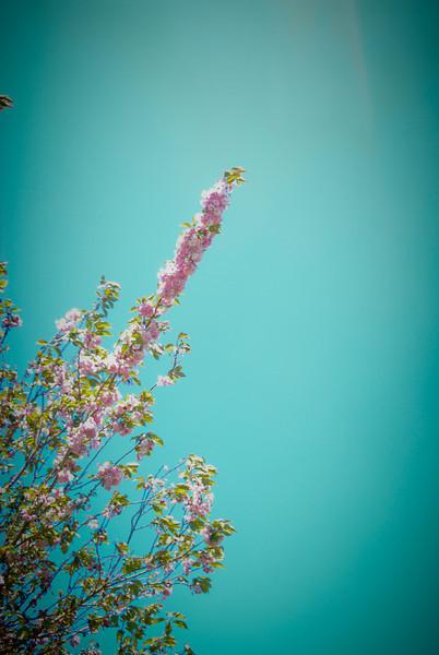 DSC_0029-flores.jpg