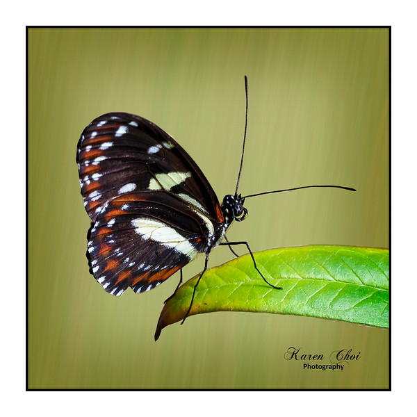 sm butterfly on leaf.jpg
