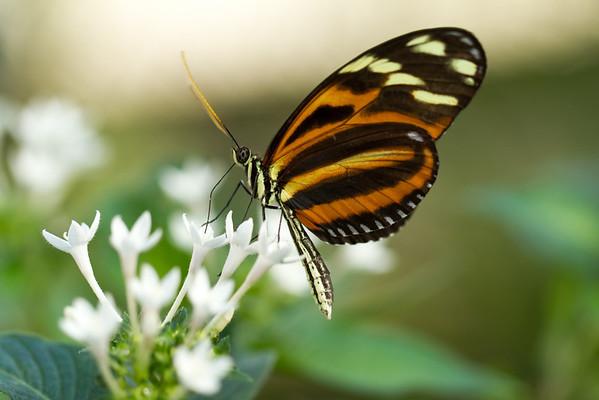 2012 Butterflies