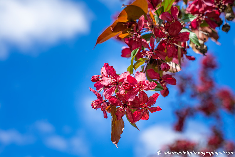 spring-flowers-eau-claire-wisconsin-5.jpg