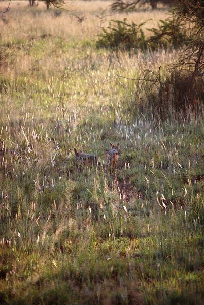 Serengeti (91).JPG
