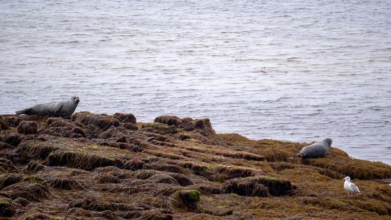 Ireland-Aran-Islands-Inishmore-20.jpg