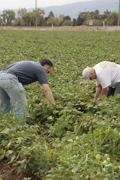 abrahamic-alliance-international-abrahamic-reunion-harvest-gilroy-2014-09-21_09-57-01-aziz-baameur.jpg