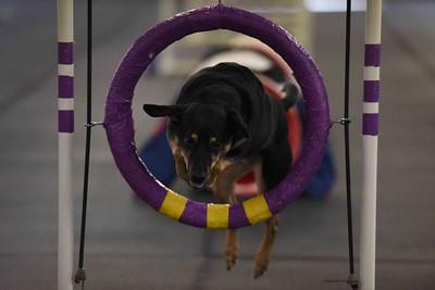 Dinky Dogs TDAA Agility - February 6-7, 2016
