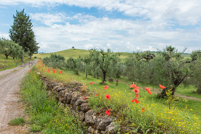 Serenity Now , Podere Spedalone , Tuscany
