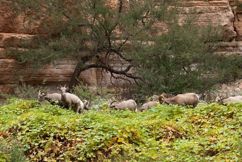 Grand Canyon October-0588.jpg