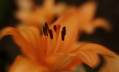 Flowers (Winnipeg Photographers)