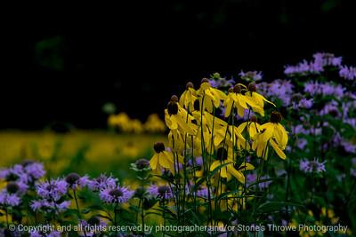 015-flower-wdsm-20jul18-12x08-007-500-6071