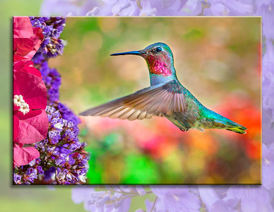 Hummingbird book 1