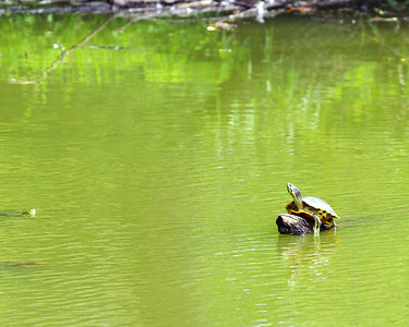 Pond at Johns Creek