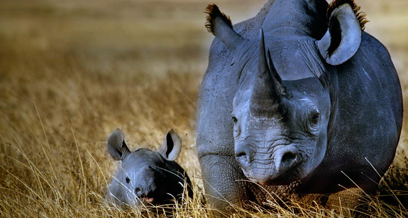 BlackRhino_EN-US696297768.jpg