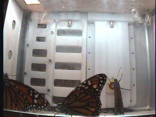 Monarch1-Gnd_Whole.2009-12-08_03-25-01.jpg