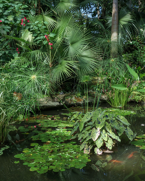 Palm Fronds and Lilly Pads
