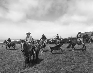 Davis Creek Marking cattle 2019