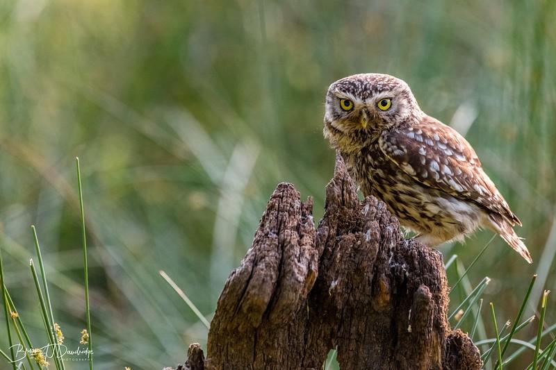 The Little Owl Shoot-6350.jpg