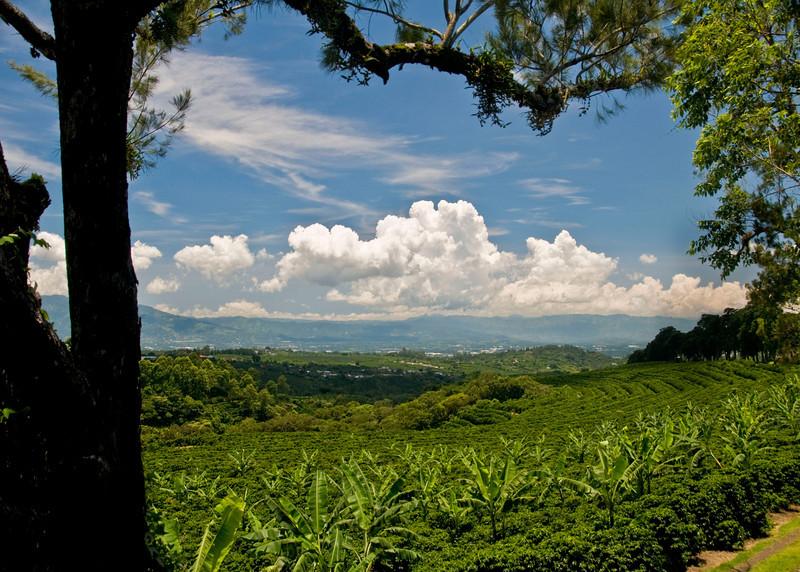 Costa Rica coffee field - Copy.jpg